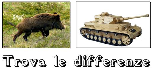 cinghiale (differenze tra i sessi)